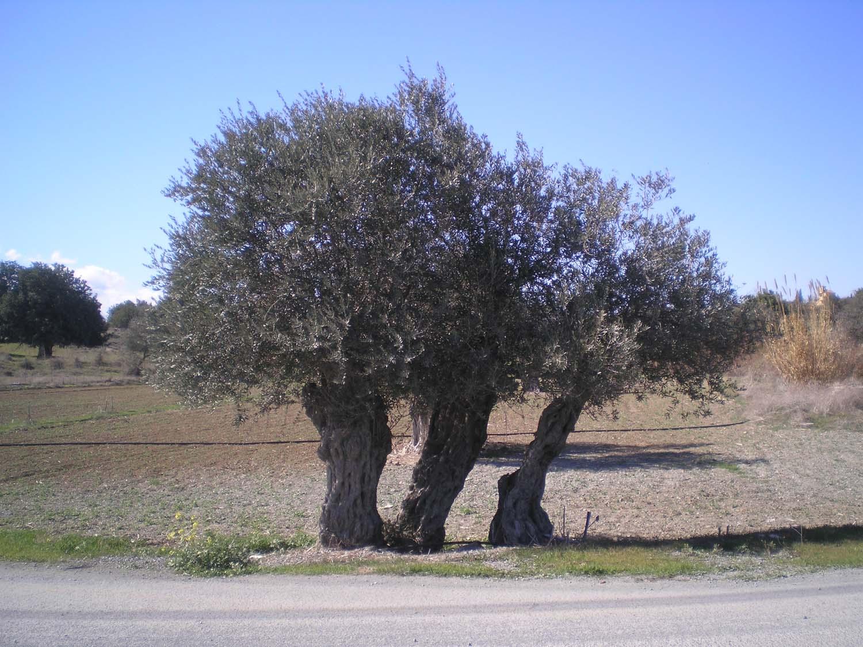 eleokaliergia_4